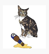 Cat & Spilled Beer Photographic Print