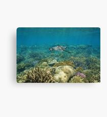 Underwater coral reef sea turtle Canvas Print