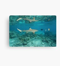 shark reflected under water surface Canvas Print