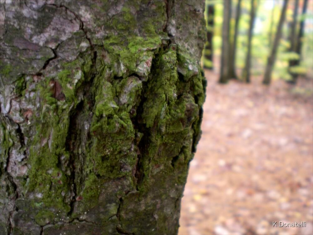 Moss by K Donatelli