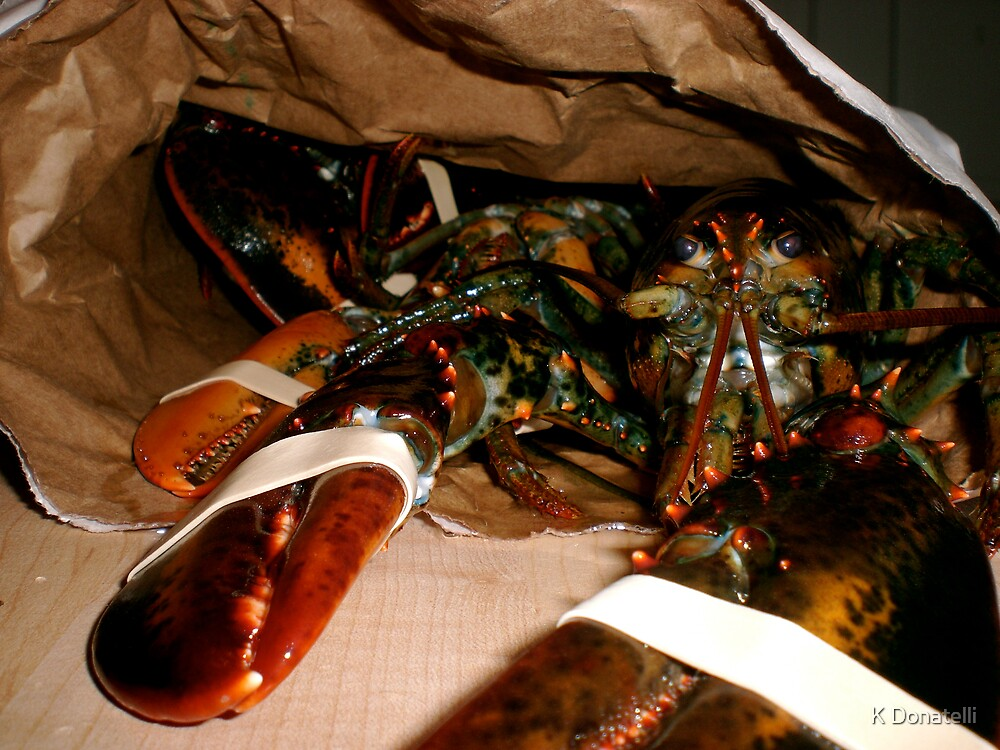 Lobster by K Donatelli