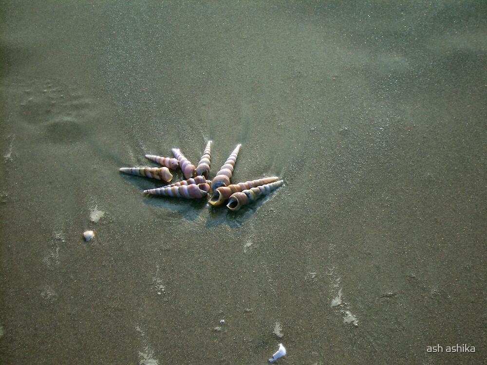 shells.............. by ash ashika