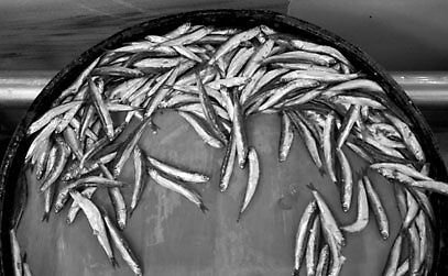 Sardines  by katiewallin