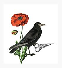 Crow & Scissors  Photographic Print
