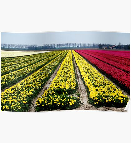 Fields of beauty Poster