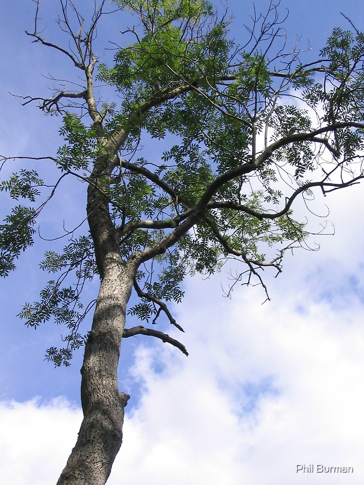 Tree by Phil Burman