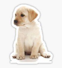 Yellow Lab Puppy Sticker