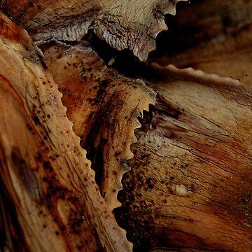 Aloe Leaves by Deon