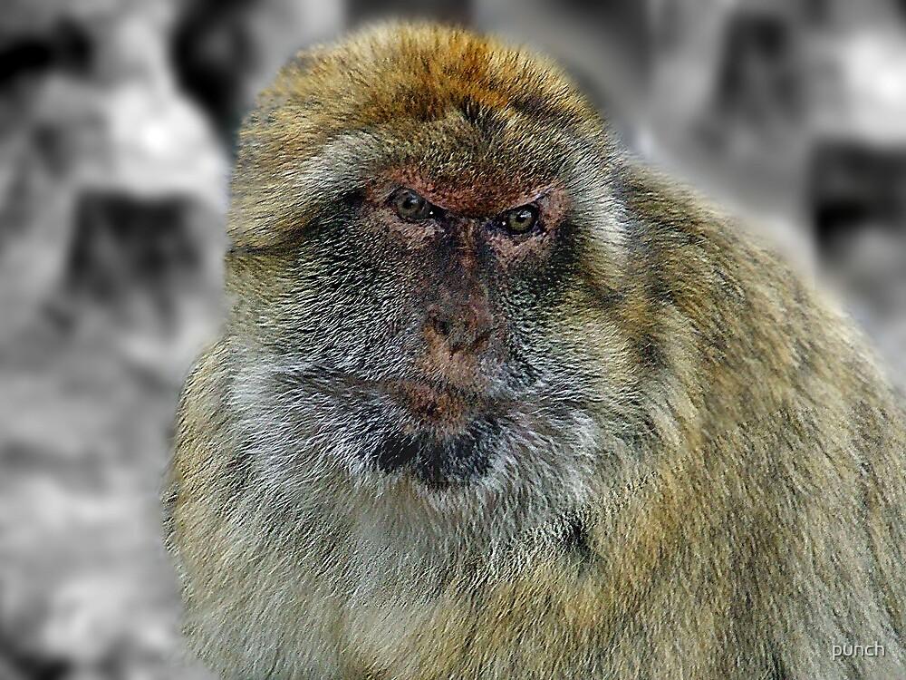 Gib Monkey by punch