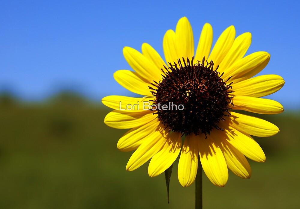 Sun Worshiper by Lori Botelho