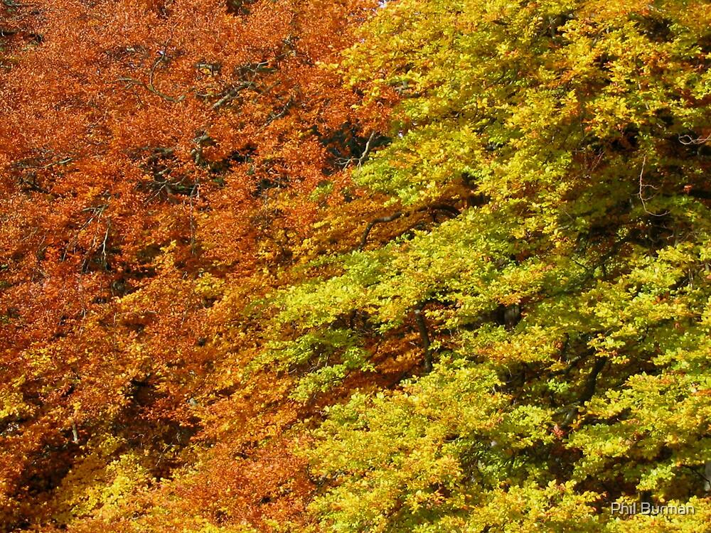 Autumn trees by Phil Burman