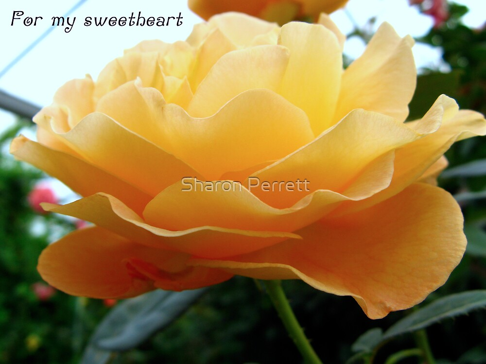 For my Sweetheart by Sharon Perrett
