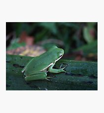 TREE FROG IN THE MORNING DEW Photographic Print