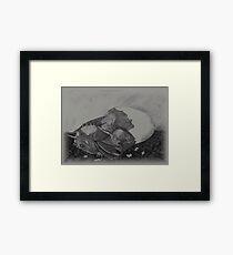 Birth of a dragon Framed Print