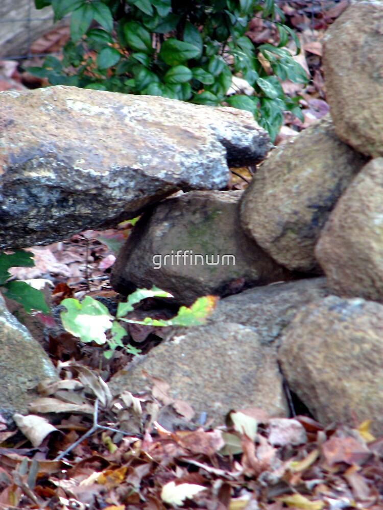 rock garden by griffinwm