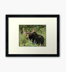 East Canyon Moose Framed Print