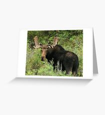 East Canyon Moose Greeting Card