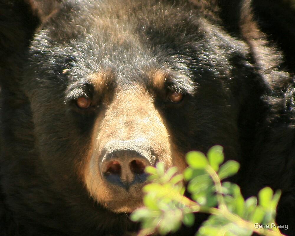 Yo Bear! by Gene Praag