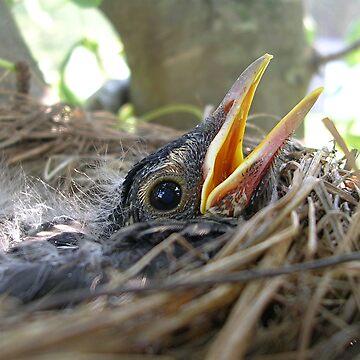 Baby Robin II by jillspring