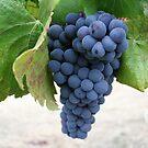 Bundle of Joy by winecountry