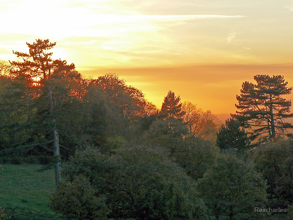 AUTUMN    SUNSET OVER THE TREES by Rexcharles