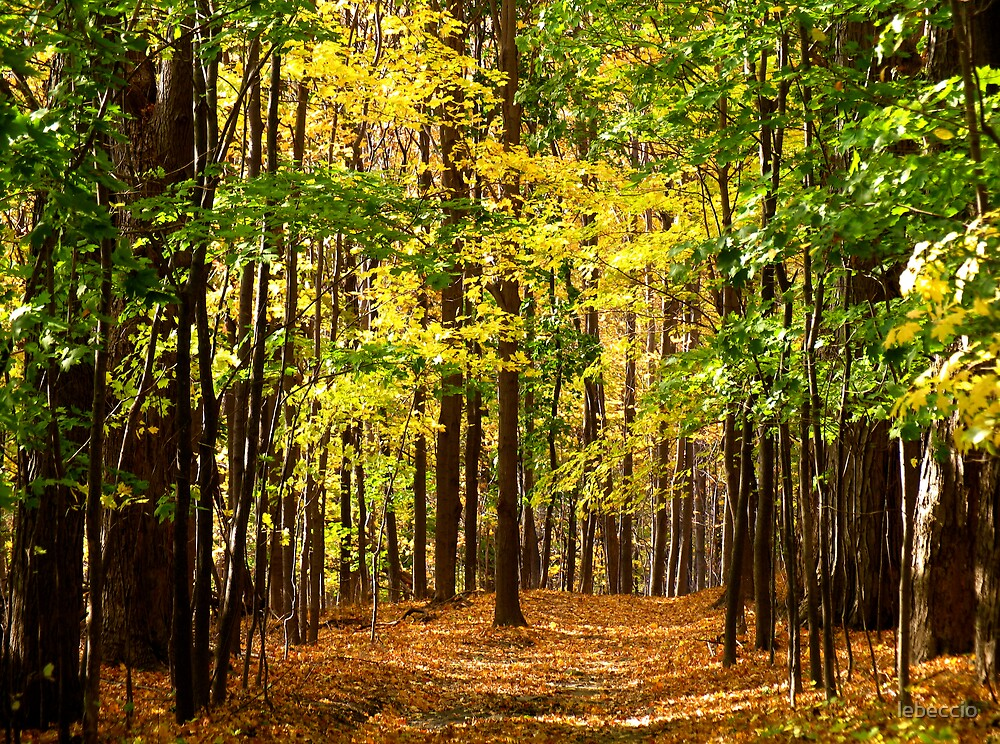 Forest Thru the Trees by lebeccio