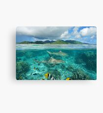 Over under sharks fish underwater Pacific island Canvas Print
