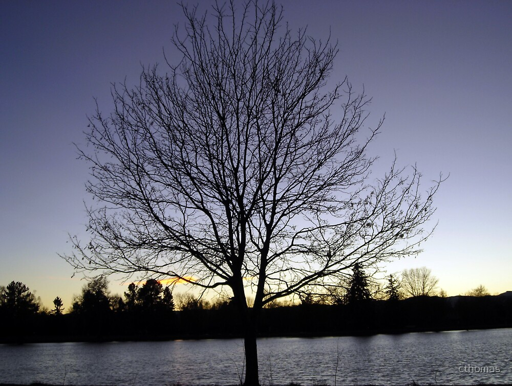 Lonely Tree on the Lake at Sunset by cthomas