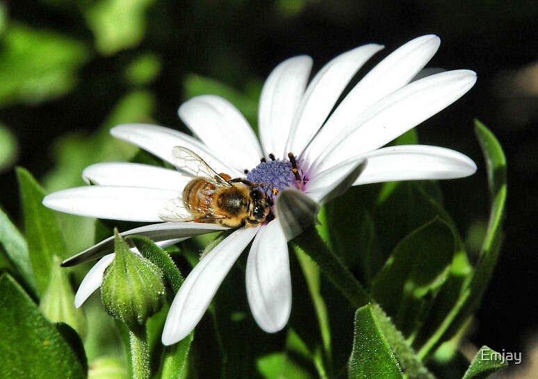 Daisy Bee by Emjay