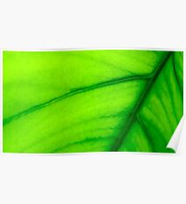 Green leaf. The color of nature Poster