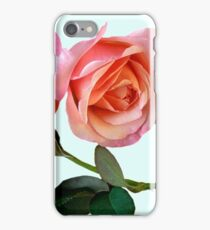 Pink Rose Flower with Green Background iPhone Case/Skin
