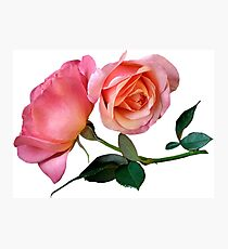 Pink Rose Flower with Green Background Photographic Print