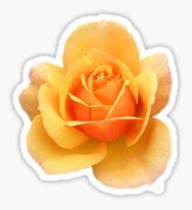 Yellow Rose Flower in Black Background Sticker