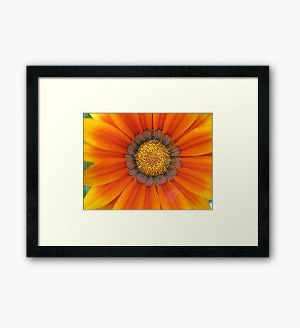 Blanket Flower Framed Print