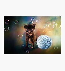 Playful cute black kitten Photographic Print