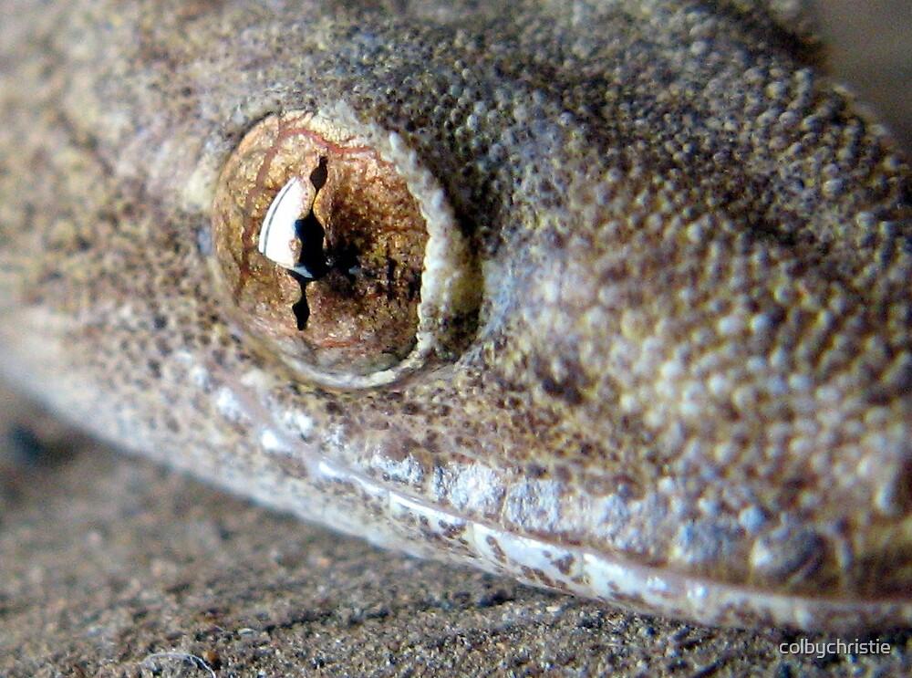 Gecko Blink by colbychristie
