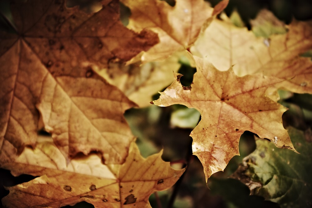 Fellowship of the leaf by John Roshka