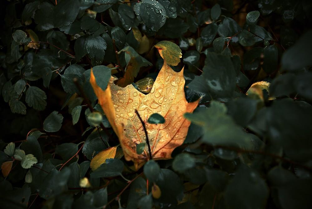 Cosy bush by John Roshka