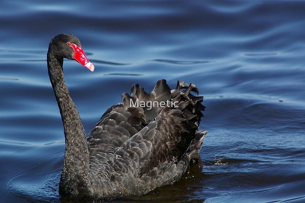 Black Swan by Magnetic