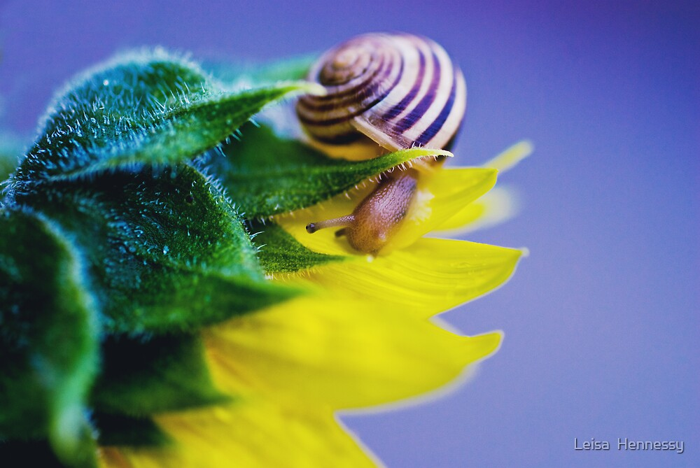Snail by Leisa  Hennessy
