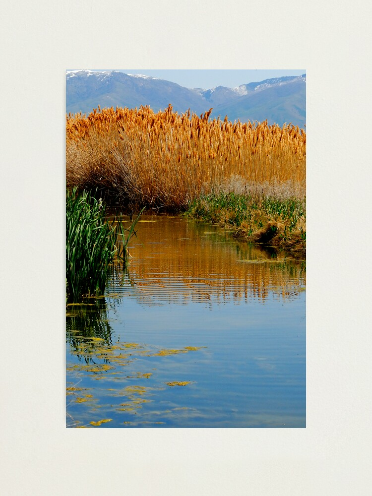 Alternate view of The Wetlands run through Me Photographic Print
