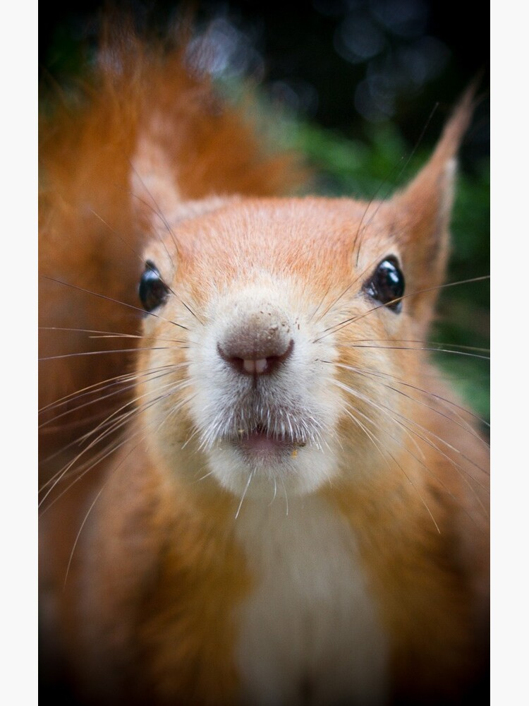 Squirrel all up in your face by dailyanimals