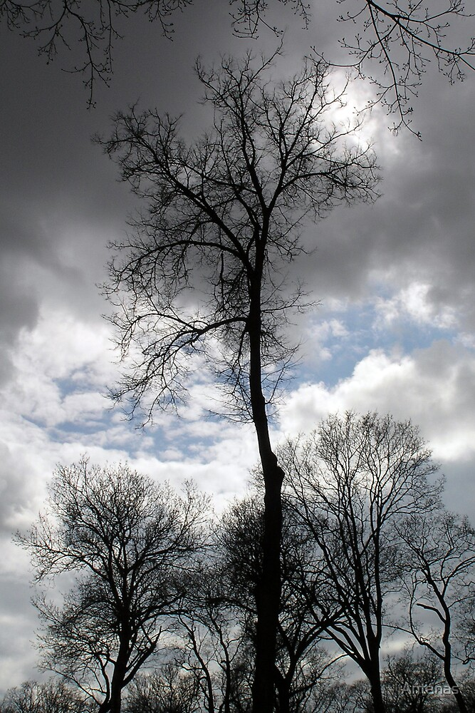 The fate of trees 3 by Antanas