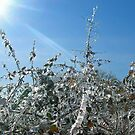 The Frozen Bush by RockyWalley