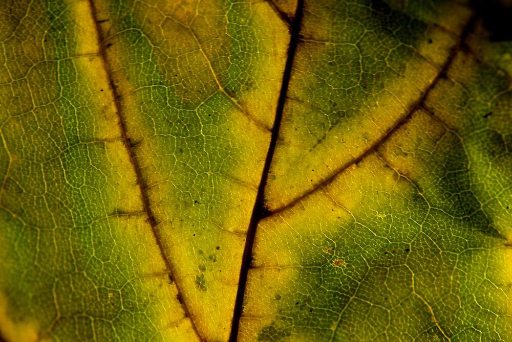 Yellow Trails by Rod  Adams