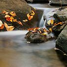 Autumn in Hacklebarney II by Debra Fedchin