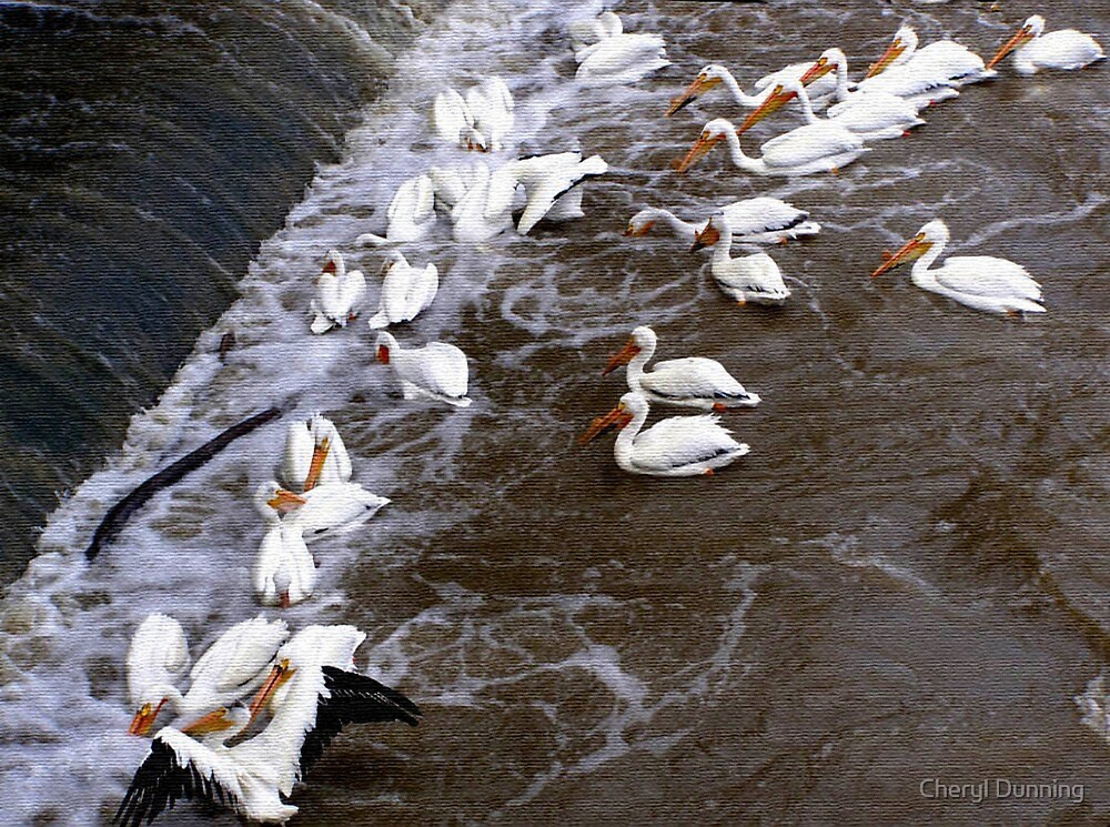 canvas like pelicans by Cheryl Dunning