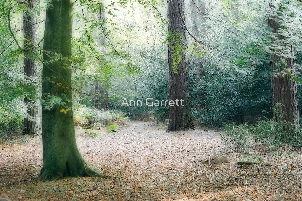 The Forest by Ann Garrett
