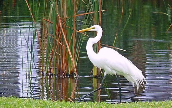 White Egret  living life in Style by lynn carter