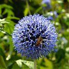 The Bee by rosaliemcm